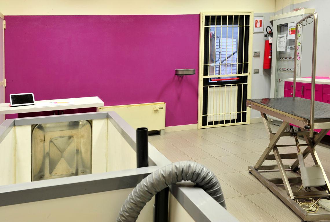 Toelettatura cani a Brescia