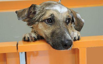 I consigli di bolle e Ciuffi … Posso usare qualsiasi shampoo per lavare il mio cane?