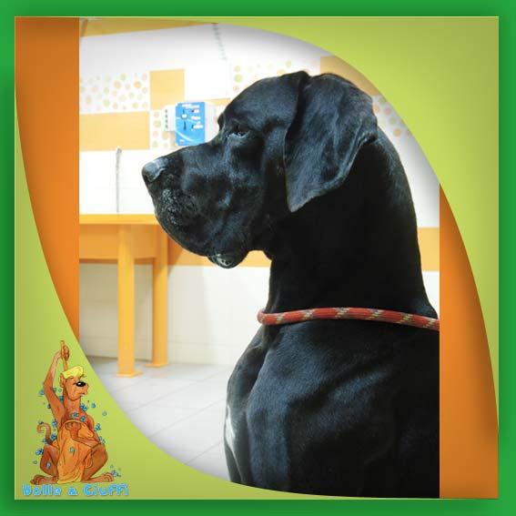 Gli amici di Bolle e Ciuffi - Lavaggio self service cani a Concesio - Brescia