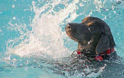 Quali vantaggi comporta l'ozonoterapia in vasca per i cani?